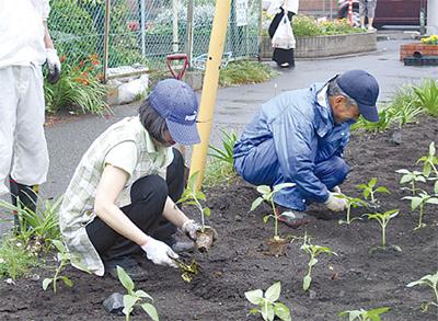 ひまわりを植栽