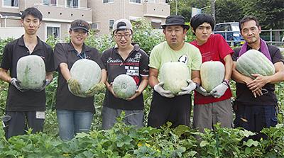 ビッグ冬瓜を収穫