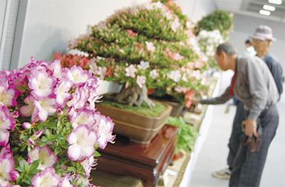 盆栽の美を競う