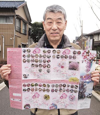桜64品種、写真で紹介