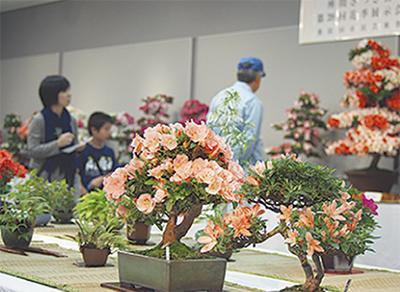 花盆栽、咲き競う