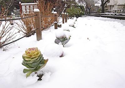 暖冬一転、初の積雪