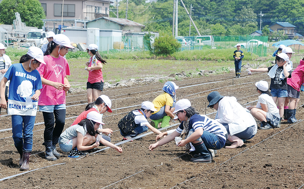 タネを蒔く相武台東小学校の児童たち=5/16=栗原地区の畑