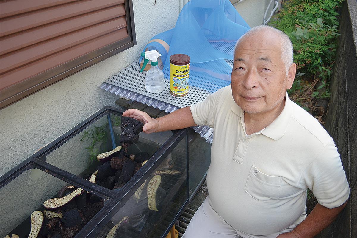 鈴虫に愛情注ぎ45年 独自の飼育法で大繁殖 | 座間 | タウンニュース