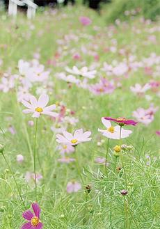斜面に咲く花(9月1日撮影)