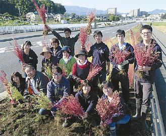 キヌアを収穫した学生ら