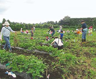 農作業の楽しさを体験
