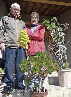 黒法師を見つめる市川さん夫妻と、株分け前の長谷川さんの鉢(右)