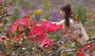 深まる秋を告げるバラ