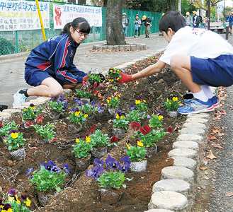 花壇に色とりどりの花を植えていく部員