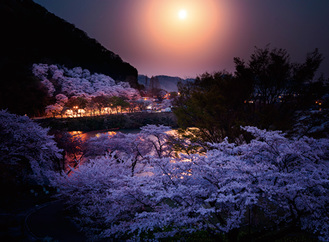 前回大賞「桜花月照」(津久井湖城山公園)