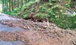 林道の被害を確認