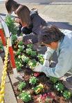 国交省の花いっぱい運動に参加