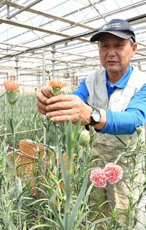 花の生育を確認する
