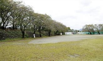 春には桜が咲き誇る広場