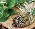 爽やかな香りと後味の良さが魅力の半原ワサビ