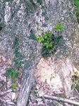 木くずが積もった被害木