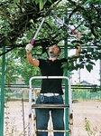 伸びすぎた枝を剪定