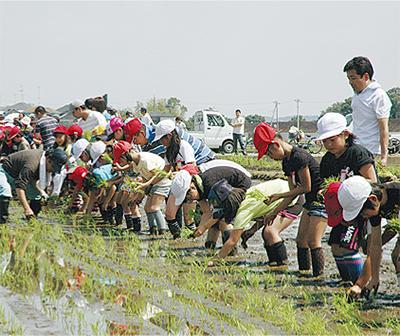 児童330人が田植え体験