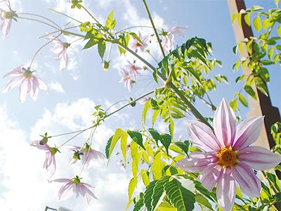 紫花冬空へ伸びる