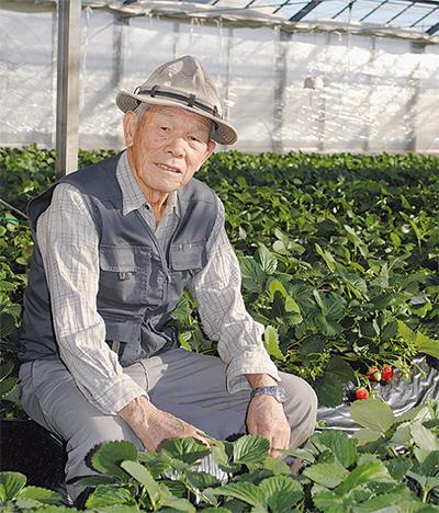 卒寿目前 イチゴ作りは現役