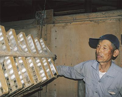 県内唯一の養蚕農家