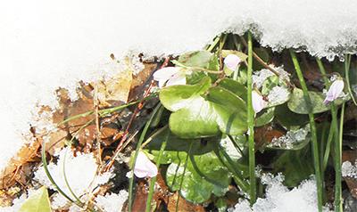 雪と野草のコラボ
