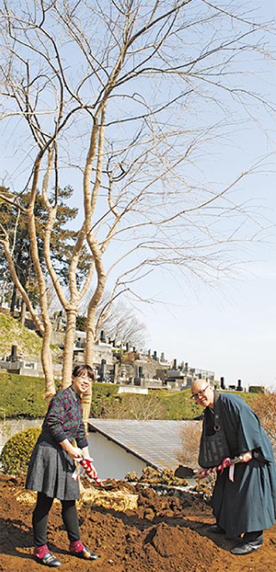 祇園の桜 棚沢に