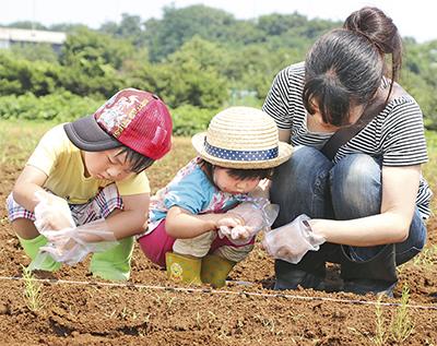 大豆栽培に挑戦