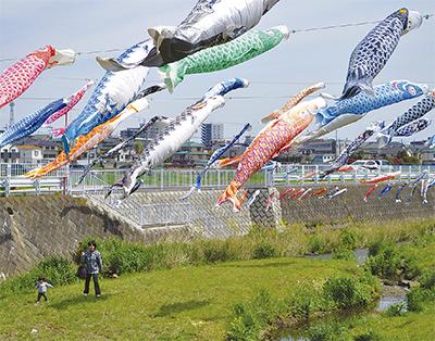 鯉のぼり200匹 恩曽川泳ぐ