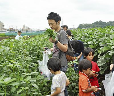 夏野菜の収穫体験