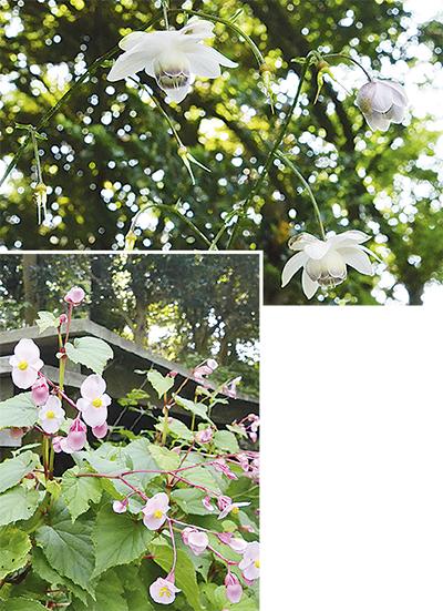 季節告げる花のリレー