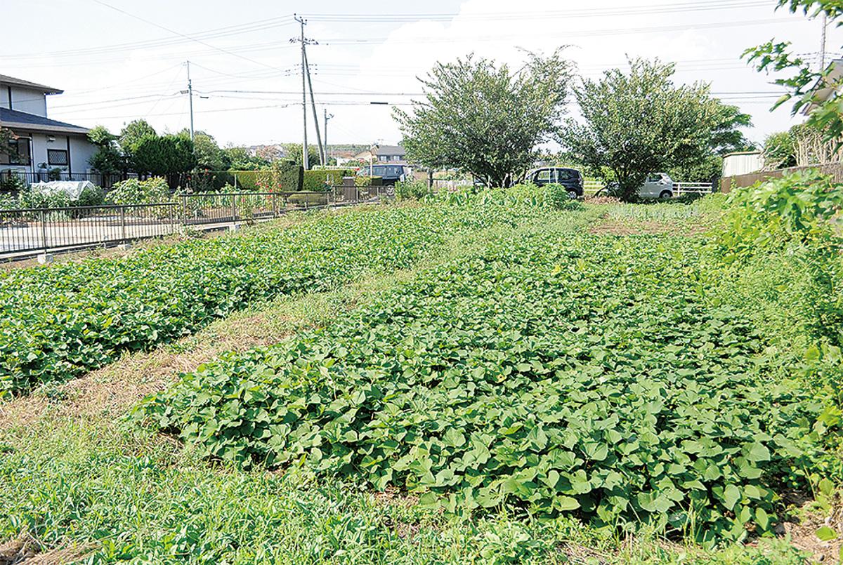 ソーラーパネルを設置する落合農園