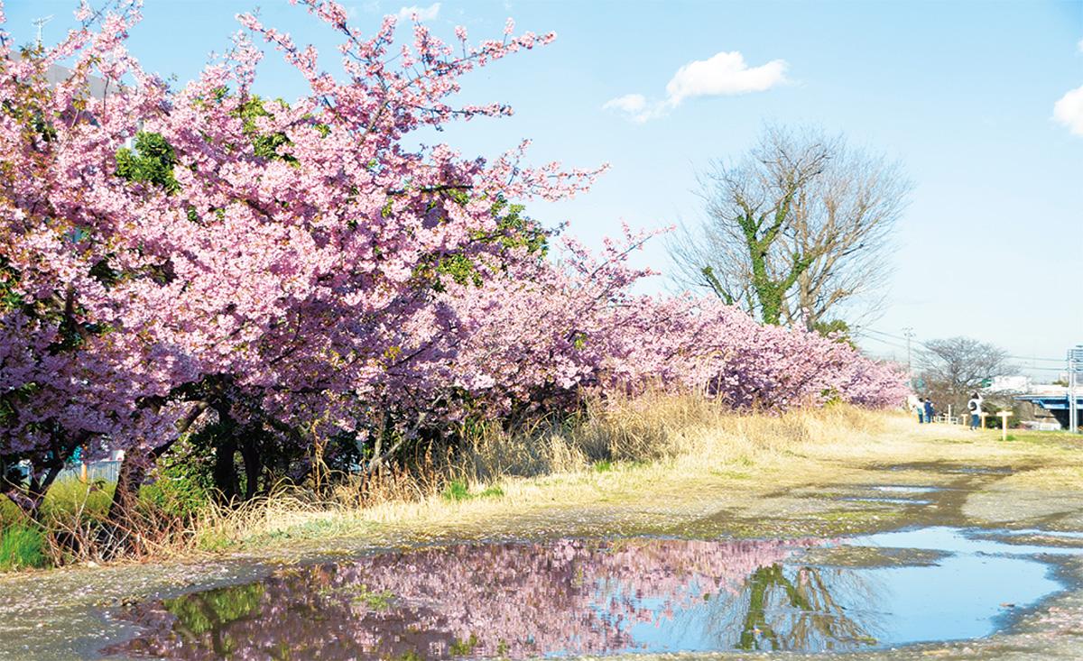 水溜まりに映えるピンク