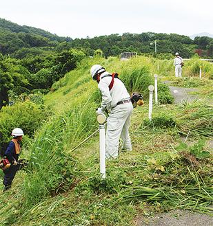 草刈り機を手に雑草を刈っていく