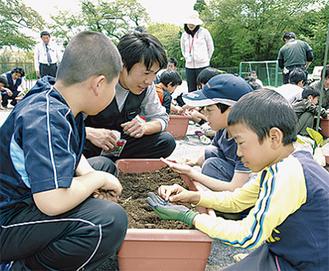 播種作業をする児童