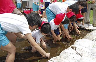 保育実習の生徒と田植え体験