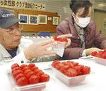 イチゴは県の品評会でも上位に入賞した