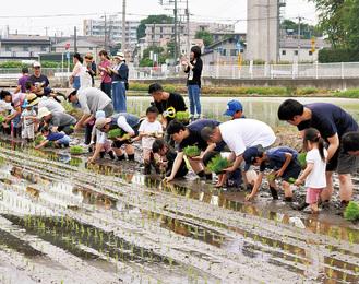 1列に並んで苗を植える参加者
