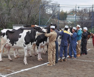 審査を待つ出品者と乳牛