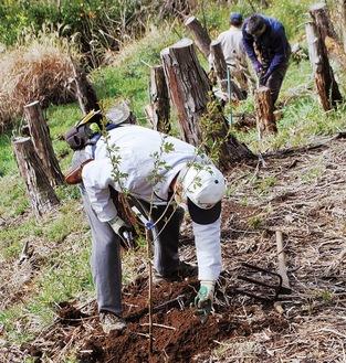 苗木を植樹する参加者ら