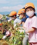保育園児が収穫体験