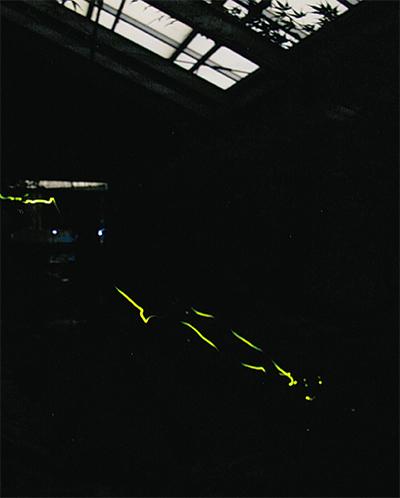 幻想的なホタルの光