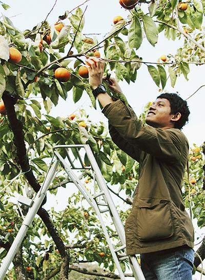 柿が繋いだ農業交流