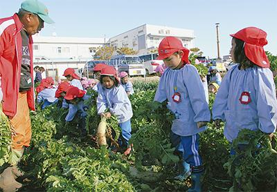 収穫で食育を学ぶ