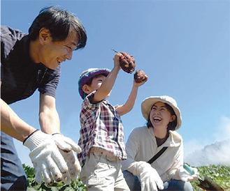 親子で力を合わせサツマイモ収穫