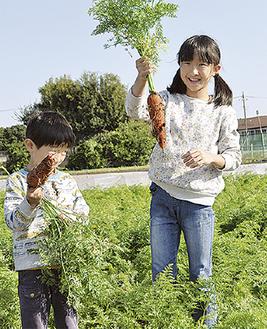 畑で収穫体験