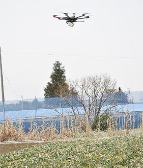 ブロッコリー畑上空を飛行するドローン