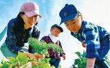 農園で野菜づくり