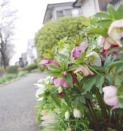 遊歩道に四季の花を
